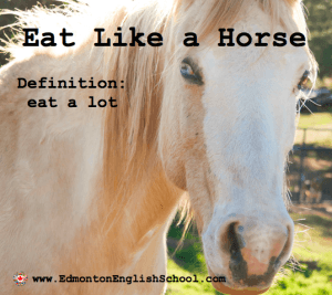 Learning English Online-eat like a horse