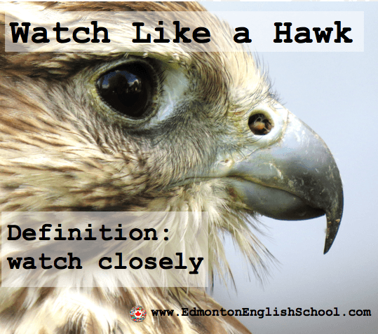 English Idioms Expressions Watch Like A Hawk Learning English
