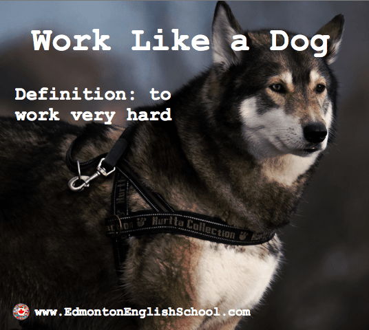 Learning English Online-work like a dog
